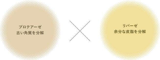 プロテアーゼ 古い角質を分解 x リパーゼ 余分な皮脂を分解