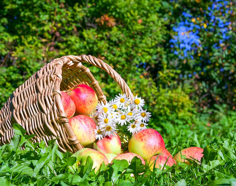 森の風景と動物たち。森の住人がつくる果実のデザート。手にするだけでワンダーな気分になれるシリーズです。お気に入りの香りや絵柄を探すのも楽しくなるような、ギフトにも最適のアイテムが揃っています。